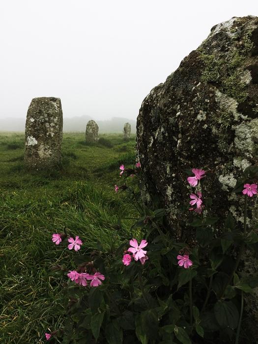 Flor e pedra 2