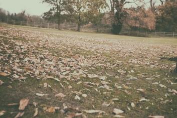 Atravessei aquele caminho, percorrido tantas vezes, como se fosse um dia qualquer. Sem paixões, sem desespero, nada. Vim só. E tudo o que ficou foi um silêncio.