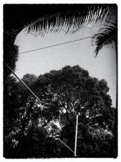 http://fotografarpalavras.blogspot.com/2020/03/2161.html